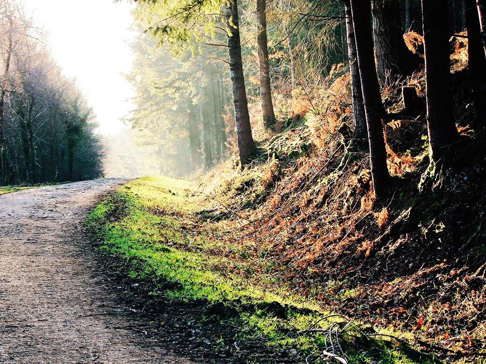 Haldon Forrest Trail Devon